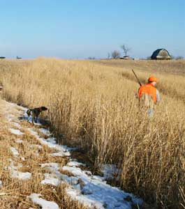 Dog Pointing Pheasant