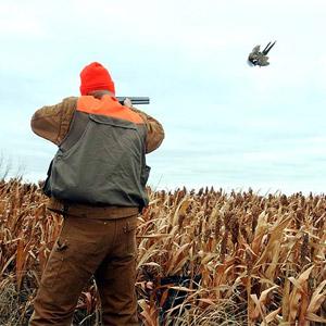 Cory Luebke Pheasant Hunt Riverside Iowa