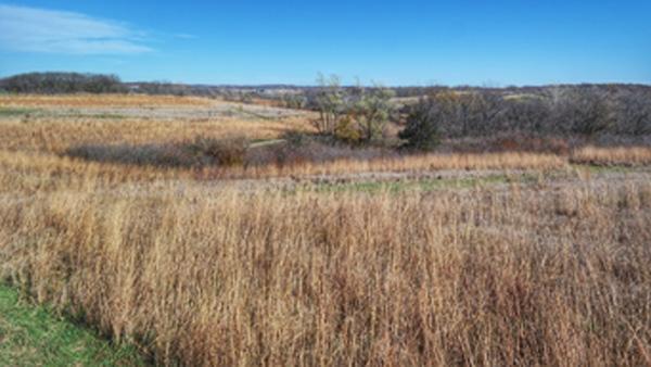 Hunting-Field-1